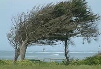 rüzgar savurur yapraklarını
