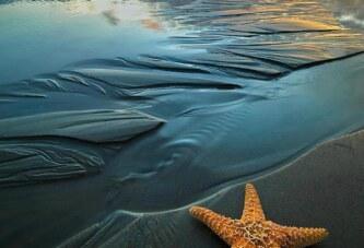bir deniz yıldızıyım