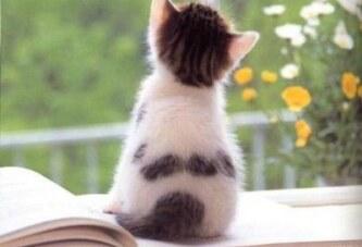 kediciğin sabah notları