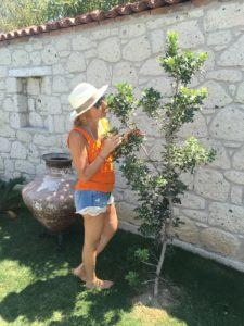 Alaçatı'da misafir olduğum evin sakız ağacı. O henüz 4-5 yıllık