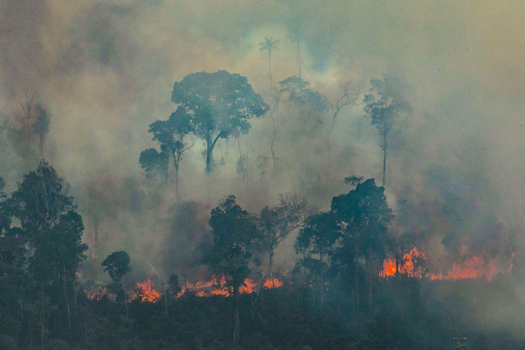 Ağaçlar cayır cayır yanarken